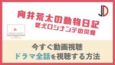 ドラマ|向井荒太の動物日記 愛犬ロシナンテの災難の動画を無料でフル視聴する方法