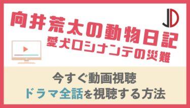 ドラマ 向井荒太の動物日記 愛犬ロシナンテの災難の動画を無料でフル視聴する方法